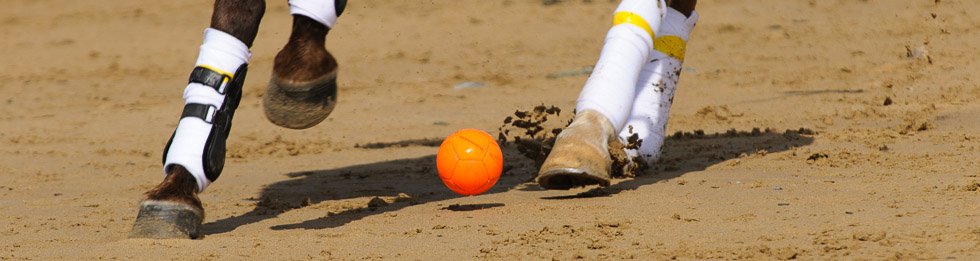 Banner Polo on the Beach © Steve Cann