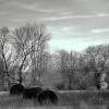 Winter Field IR © Jacqui Hollinshead