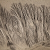 Beach Tree Pattern © Joanna Clegg