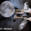 PPG1415-750-Moon Flight-Peter Menear-PPG-Peter Menear