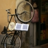 PPG1516-500-Retired but still working, Lucca, Italy_010-