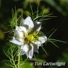 PPG1516-500-Nigella-Tim Cartwright-PPG-