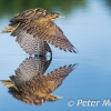 PPG1516-750-Bittern Water Kiss (W)-Peter Menear-PPG-Peter Menear