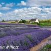 PPG1516-750-Lavender Fields-030-Robin Millett
