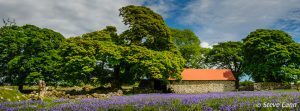 Day Trip - Dartmoor for Landscape and Bluebells @ Dartmoor | Widecombe in the Moor | England | United Kingdom
